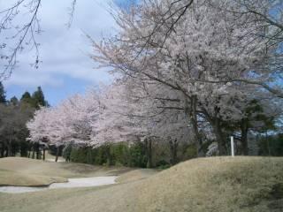 桜の花が満開だった『宍戸ヒルズカントリークラブ』